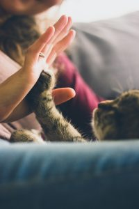 cat giving a high five