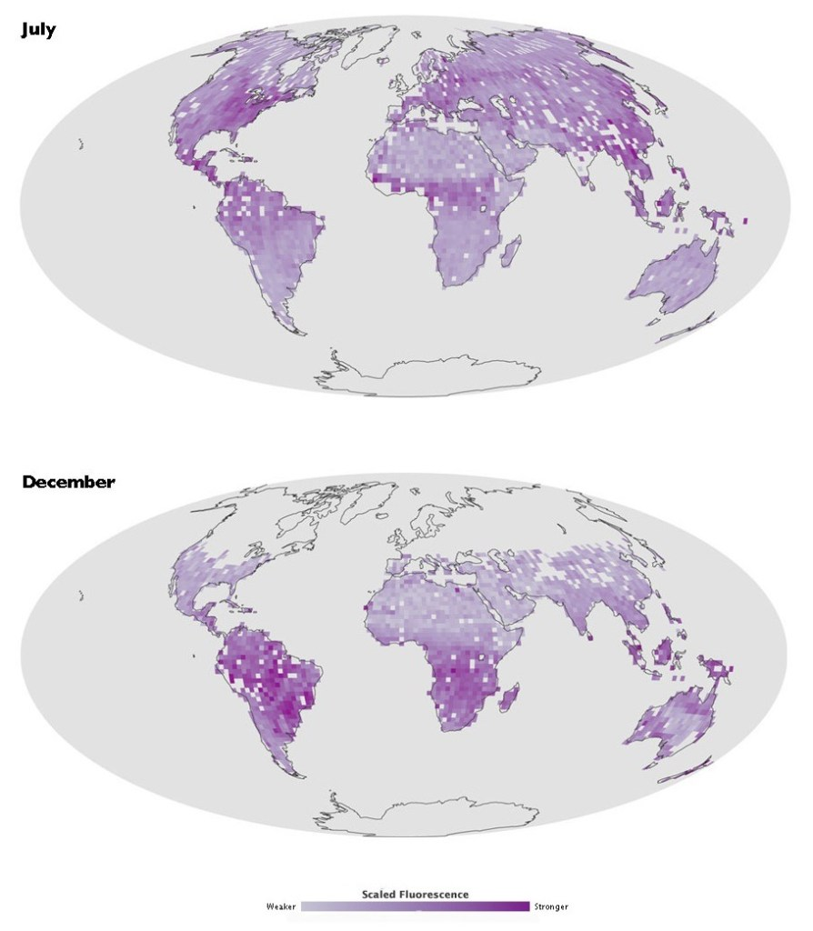Global satellite map of light emitted by plants during photosynthesis in july and december