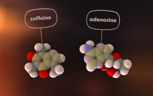 comparison of caffeine and adenosine molecules