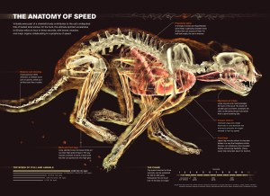 Show, Not Tell: The Rise of the Infographic  Science Friday
