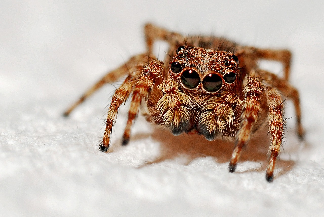 Arachnids Spiders For Kids Interesting Facts About