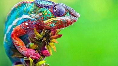 Photo of Evoluzione e diversità delle specie biologiche