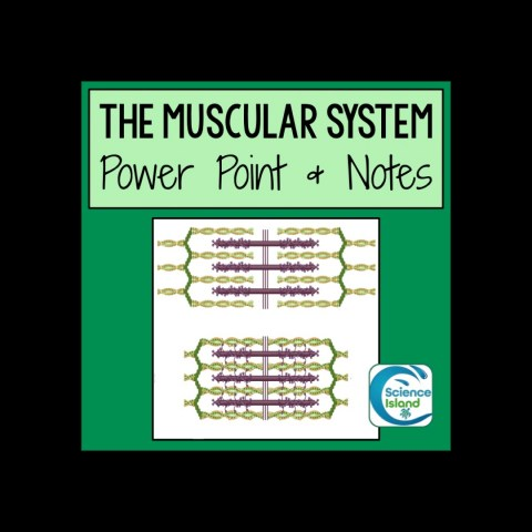 Muscular System PowerPoint and Notes
