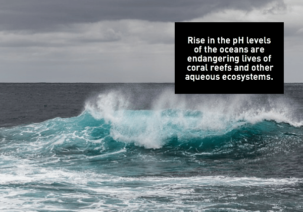 Rising pH level of oceans