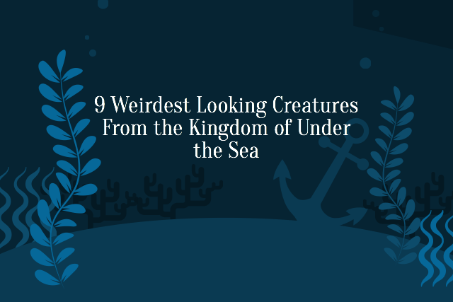 9 Strangest Looking Creatures From the Kingdom of Under the Sea What's the Weirdest One?