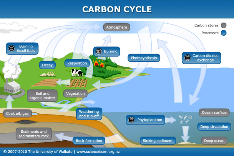 Carbon cycle — Science Learning Hub