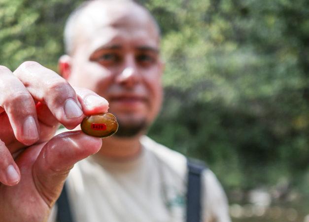 Tim Lane holding a mussel
