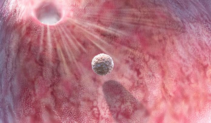 illustration of a blastocyst heading toward the uterus