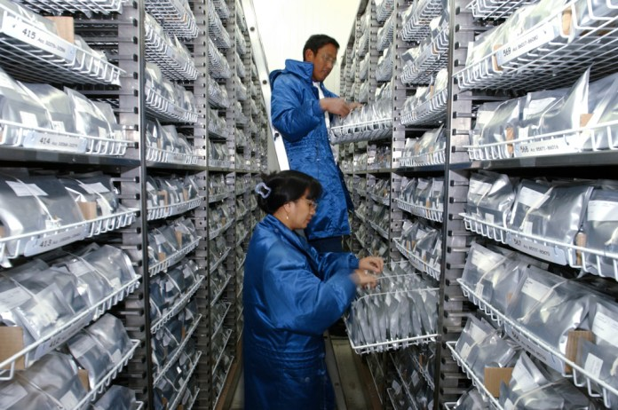 two people in blue jumpsuits looking at rice seeds on shelves