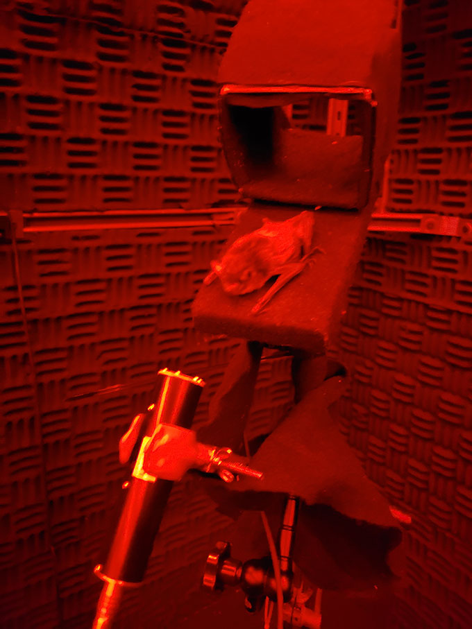 a bat in front of a microphone under red light