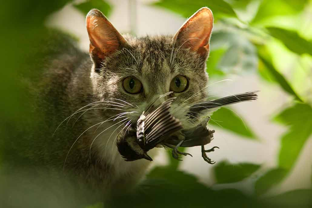 a photo of a cat holding a bird in its mouth