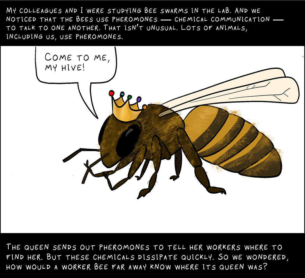 My colleagues and I were studying bee swarms in the lab. And we noticed that the bees use pheromones ― chemical communication ― to talk to one another. That isn't unusual. Lots of animals, including us, use pheromones.  Queen bee: Come to me, my hive!  The queen sends out pheromones to tell her workers where to find her. But these chemicals dissipate quickly. So we wondered, how would a worker bee far away know where its queen was?