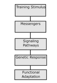signalling-pathway-picture