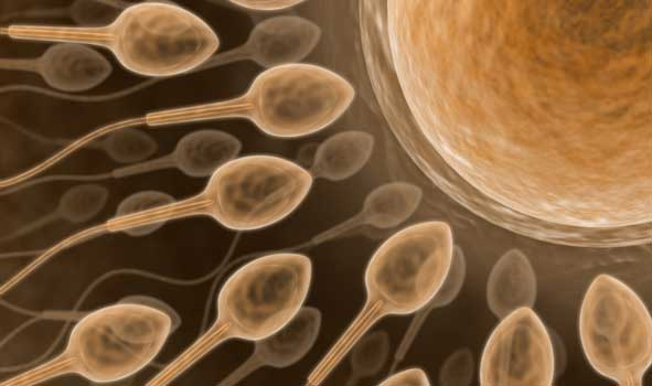 https://i2.wp.com/www.scienceprogress.org/wp-content/uploads/2007/11/sperm.jpg