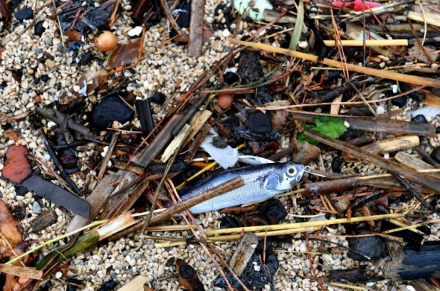 La plage de La Ciotat, polluée par des traces d'hydrocarbures, le 1er novembre 2018 (AFP/Archives - GERARD JULIEN)