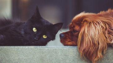 Une alimentation personnalisée pour chien et chat
