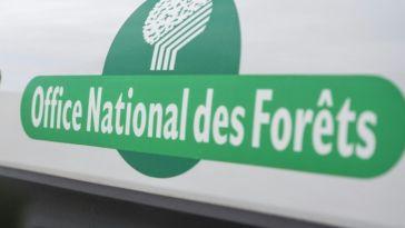 L'Office national des forêts va supprimer près de 500 postes en cinq ans