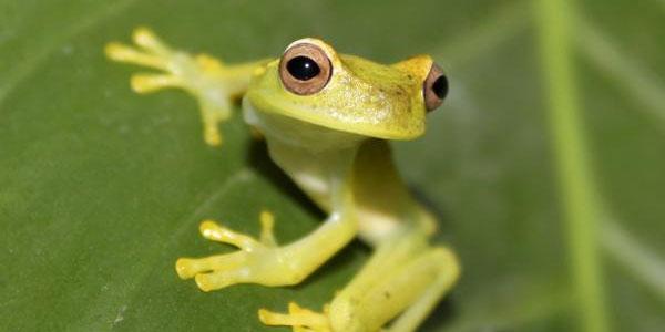 Biodiversiteit sinds 1970 sterk verslechterd