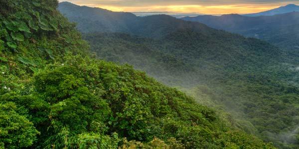 Een nevelwoud. U ziet de nevels rechts goed hangen. Foto: Drew Fulton (Canopy in the Clouds).