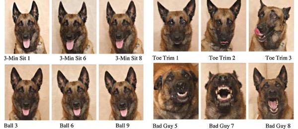 De foto's van de honden. Foto's: Keith Reynolds of Barnwood Gallery, Utica Pennsylvania / © Tina Bloom.