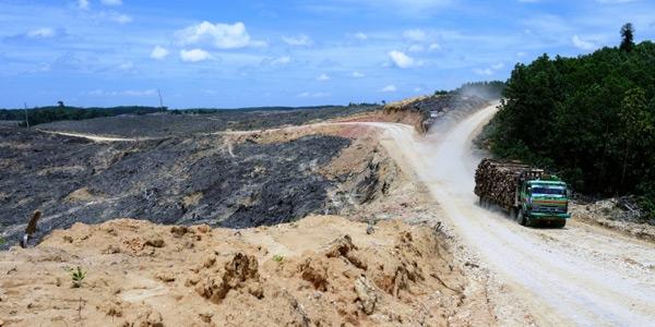 Nog een foto waarop te zien is dat de aanleg van wegen de weg letterlijk vrijmaakt voor ontbossing. Foto: William Laurance / UU.nl.
