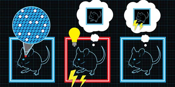 In kooi A maakt de muis een herinnering aan kooi A aan. In kooi B wordt die herinnering weer opgeroepen, terwijl de muis stroomschokken krijgt. Hierdoor gaat de muis kooi A met stroomschokken associëren. Wanneer de muizen in kooi C worden geplaatst, kunnen die onterecht nare herinneringen aan kooi A met behulp van licht elk moment worden opgeroepen. Afbeelding: Collective Next.