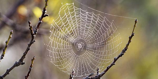 spinnenewb