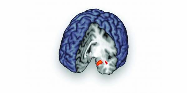 brein laat chemisch stofje vrij
