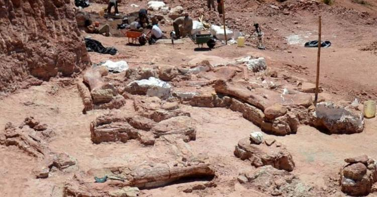 De opgravingen. Foto: MEF.