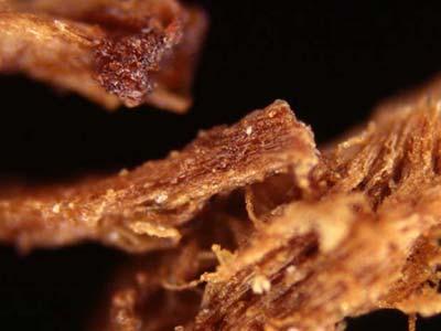 Onder de microscoop worden de restjes balsem zichtbaar. Afbeelding: PLoS ONE / doi:10.1371/journal.pone.0103608.g002.
