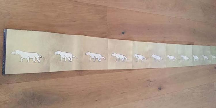 30 meter evolutie. Als je ieder illustratie naast elkaar ziet, dan zijn er geen verschillen te spotten. Evolutie lijkt onzichtbaar.