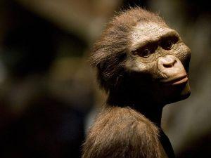 De eerste mensachtigen - zoals Lucy - zagen er nog meer uit als apen, dan als moderne mensen.