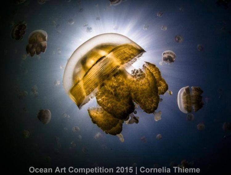 Een gouden kwal, omringt door ontelbaar veel soortgenoten. Een schitterend beeld!