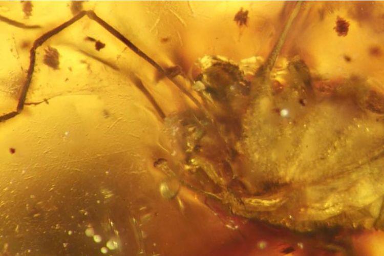 De penis van de spin is goed zichtbaar. Afbeelding: Jason Dunlop / MfN Berlin.