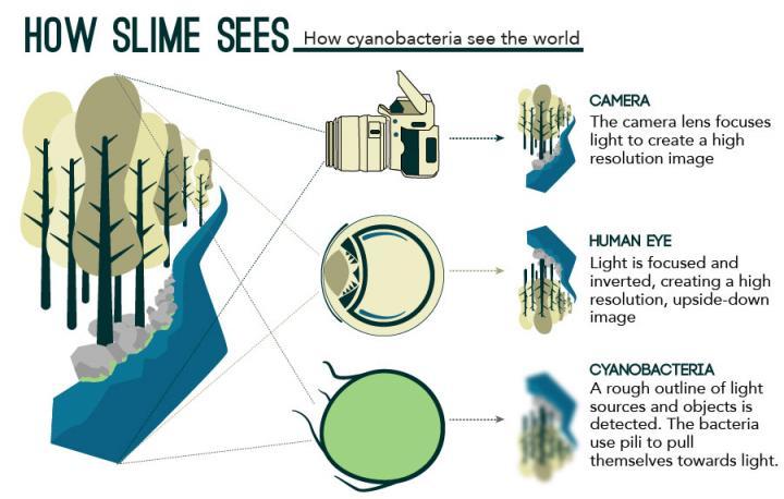 Zo 'ziet' een camera, een menselijk oog en een bacterie de wereld. Afbeelding: eLife / http://dx.doi.org/10.7554/eLife.12620.
