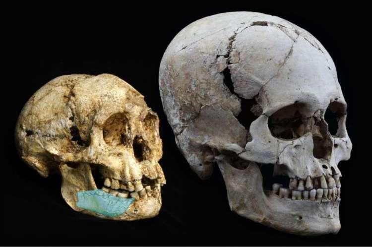 Links een schedel van een hobbit (het nu ontdekte deel van de onderkaak is ingetekend) en rechts de schedel van de moderne mens. Afbeelding: Kinez Riza.