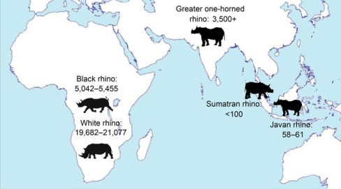 Neushoornpopulaties wereldwijd. Credits: Save the Rhino