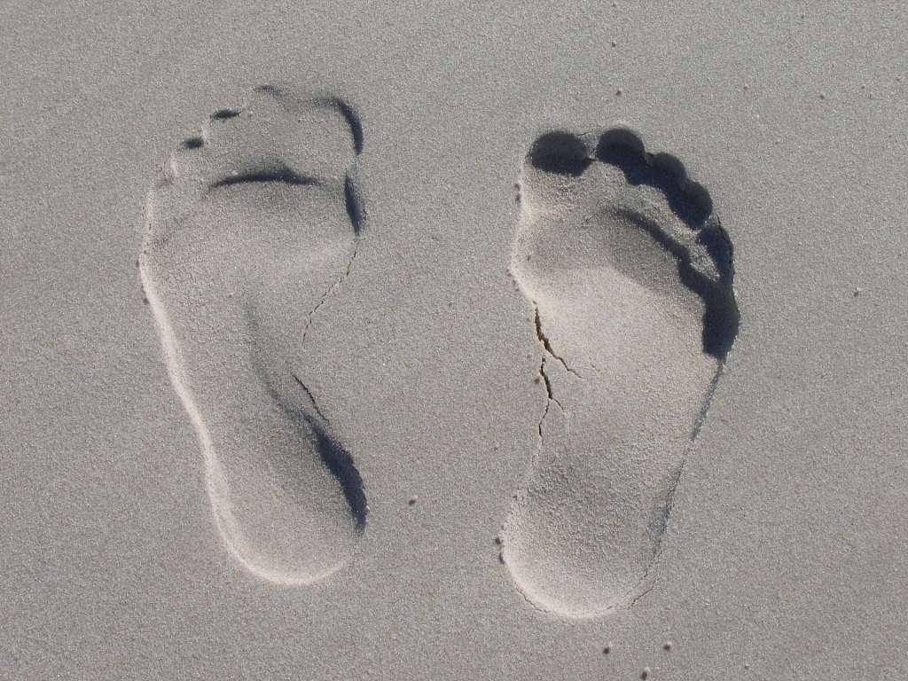 Voorouder van de mens wandelde al regelmatig rond op de grond