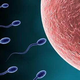 Sperm approaching egg