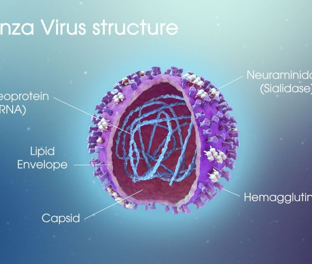 Influenza A Detailed Account