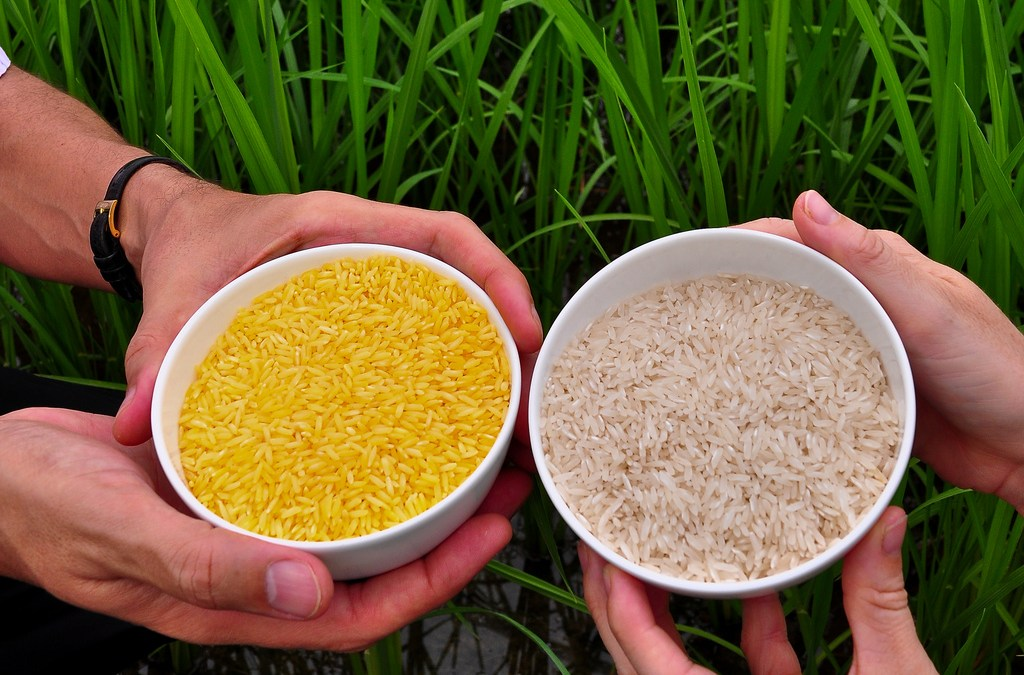 110 Nobel contro Greenpeace: il caso Golden Rice