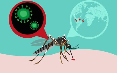 E se Zika non fosse solo un problema delle donne in gravidanza?