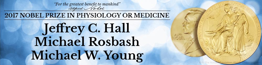 Period, timeless e doubletime: assegnato il Nobel per la medicina