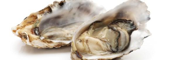 2001 ostriche nell'etologia – Scientificast #198