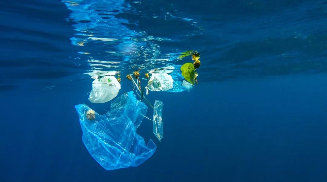 Salmoni OGM per pulire il mare
