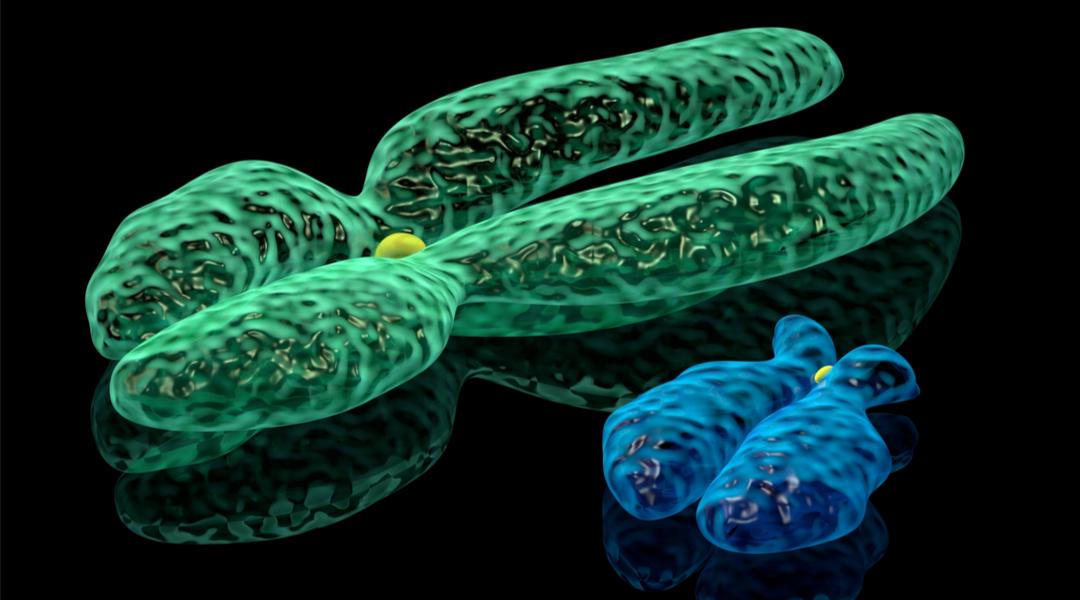 Cromosomi social col fegato grasso