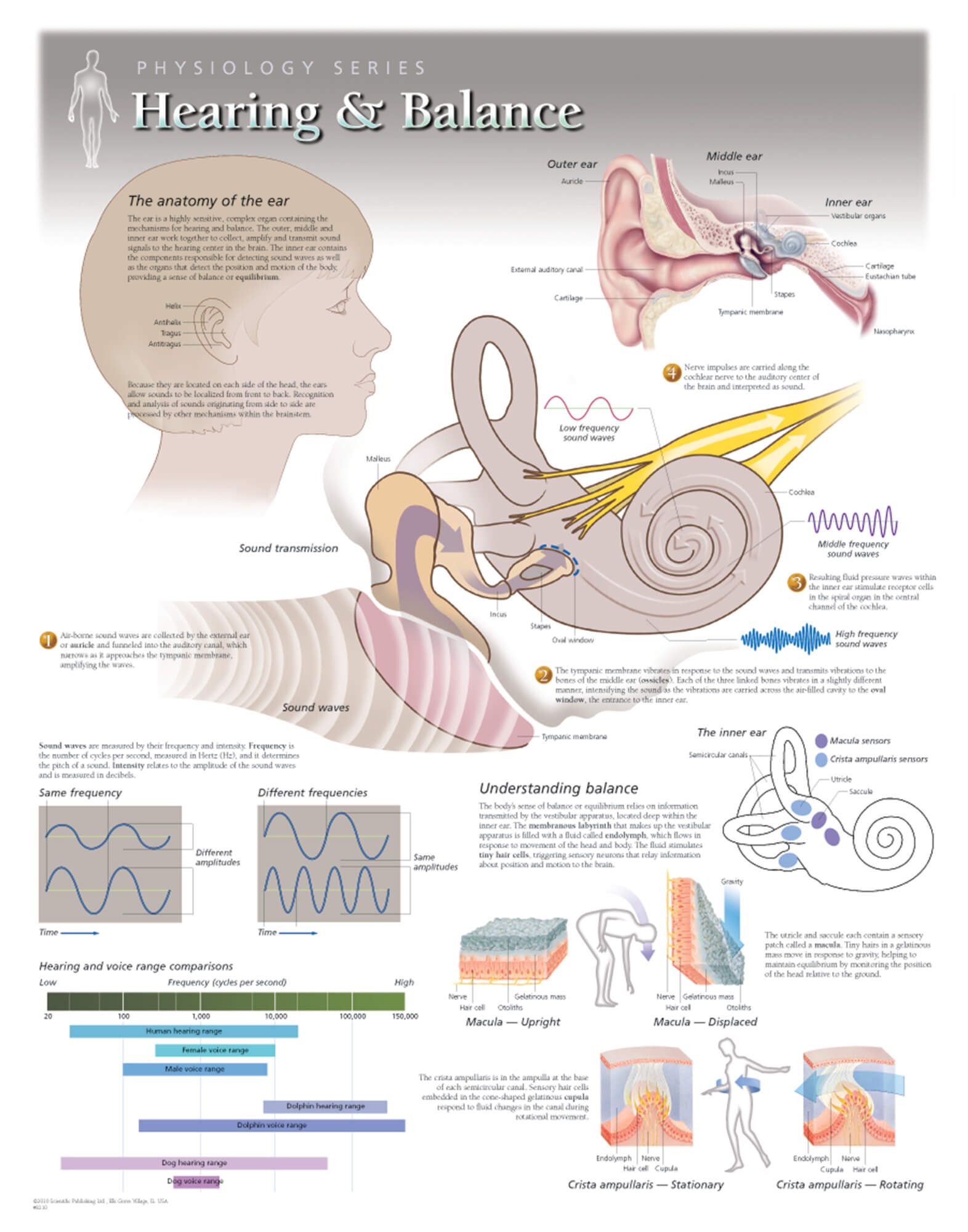 Hearing And Balance Scientific Publishing