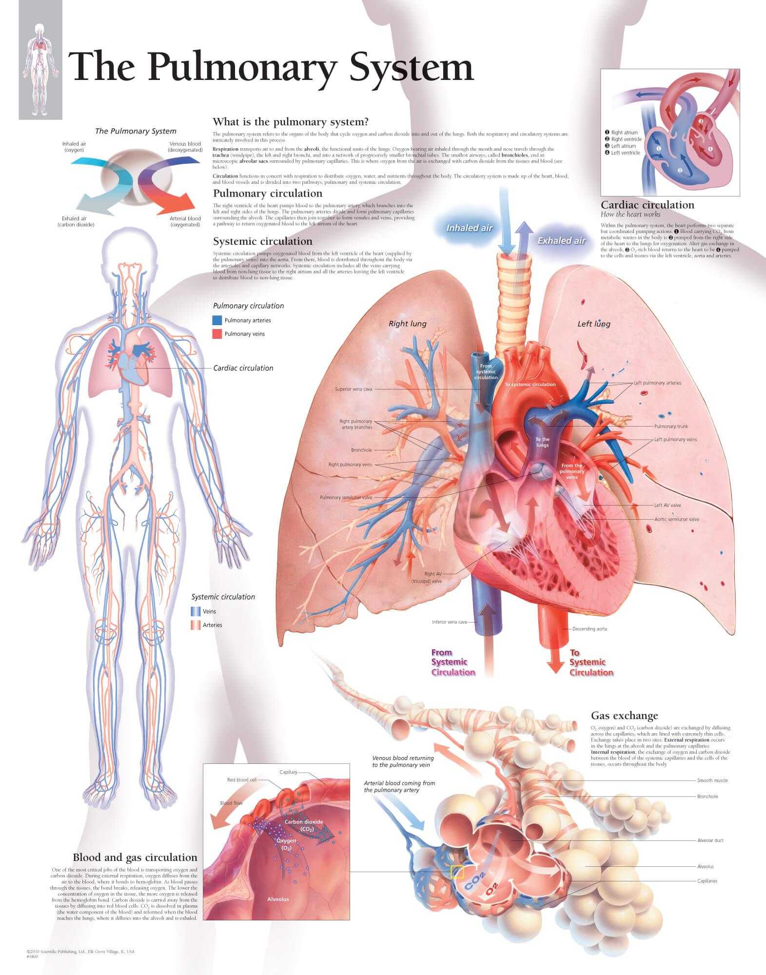 The Pulmonary System Scientific Publishing