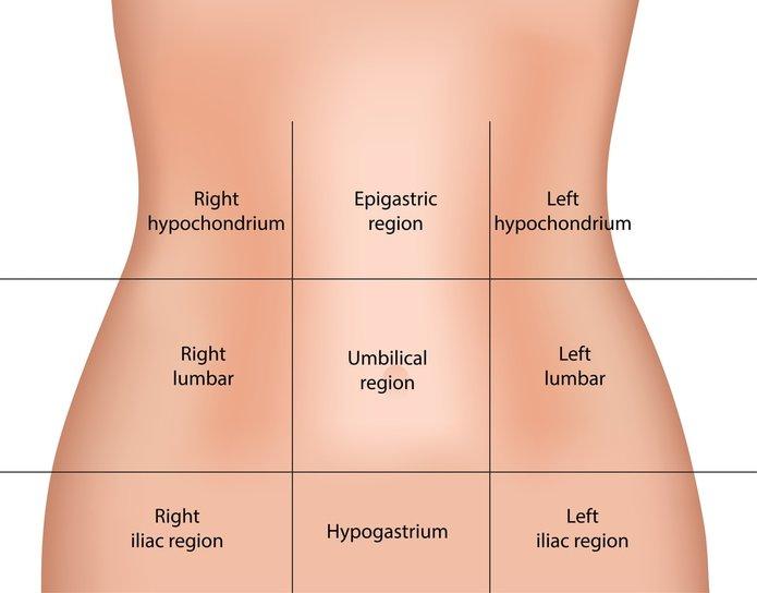 Anatomical Regions - SCIENTIST CINDY