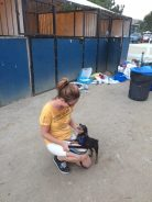 Helping animals displaced by evacuated houses